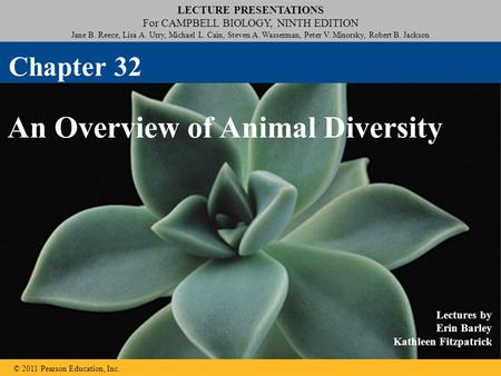 An Overview of Animal Diversity