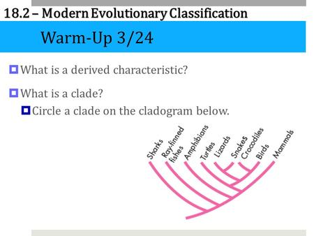 Warm-Up 3/24 What is a derived characteristic? What is a clade?