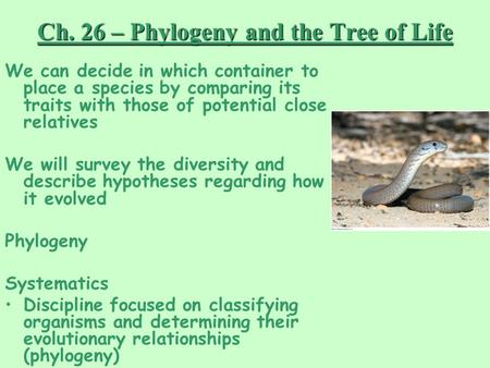 Ch. 26 – Phylogeny and the Tree of Life