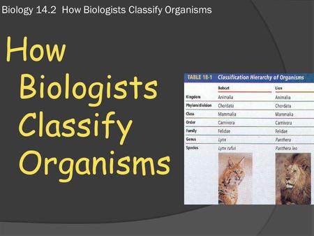 Biology 14.2 How Biologists Classify Organisms