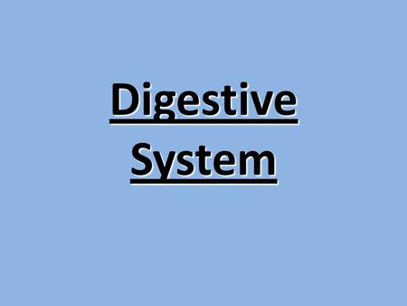 Digestive System Digestion Phases Include 1.Ingestion 2.Movement 3.Mechanical and Chemical Digestion 4.Absorption 5.Elimination.