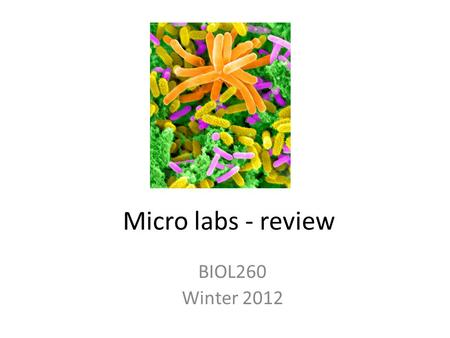 Micro labs - review BIOL260 Winter 2012. Ubiquity What organisms grow best at room temperature? ___°C? At body temperature? = ___°C? What kind of medium.