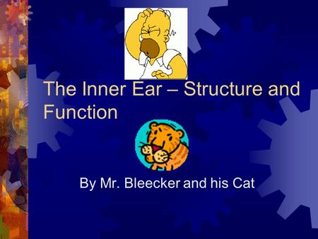 The Inner Ear – Structure and Function
