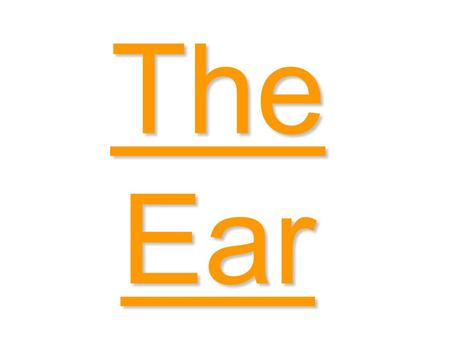 The Ear Ear canal Ear drumCochlea Auditory nerve Semi- circular canals - The Ear Pinna Stirrup AnvilHammer Eustachian tube.