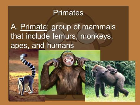 Primates A. Primate: group of mammals that include lemurs, monkeys, apes, and humans.
