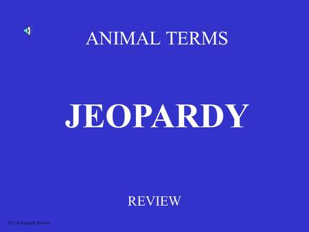 ANIMAL TERMS REVIEW JEOPARDY S2C06 Jeopardy Review.