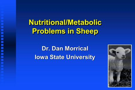 Nutritional/Metabolic Problems in Sheep Dr. Dan Morrical Iowa State University.