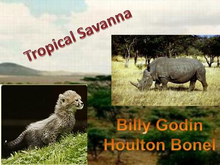 Some of the savannas are located in South America and South East Asia.