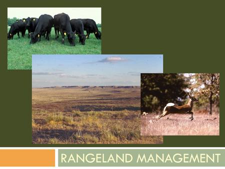 RANGELAND MANAGEMENT. The Problem  How do we manage our grasslands for maximum production and while maintaining sustainability?