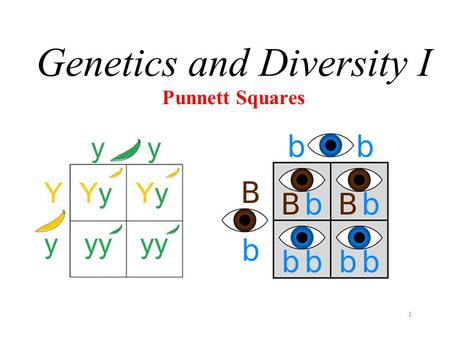 1 Punnett Squares Genetics and Diversity I. S1-1-12 Differentiate between dominant and recessive genes. Vocabulary & People GenotypePhenotype DominantRecessiveAllele.