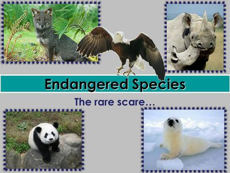 <strong>Endangered</strong> <strong>Species</strong> The rare scare….