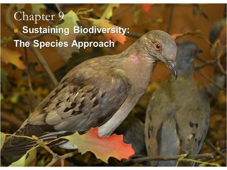 Chapter 9 Sustaining Biodiversity: The <strong>Species</strong> Approach.