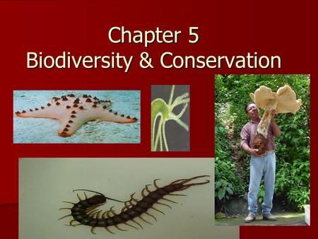 Chapter 5 Biodiversity & Conservation. Biodiversity is the variety of life in an area that is determined by the total number of different species. Biodiversity.
