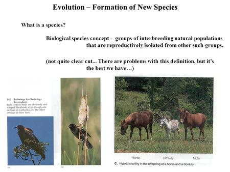Evolution – Formation of New Species What is a species? Biological species concept - groups of interbreeding natural populations that are reproductively.