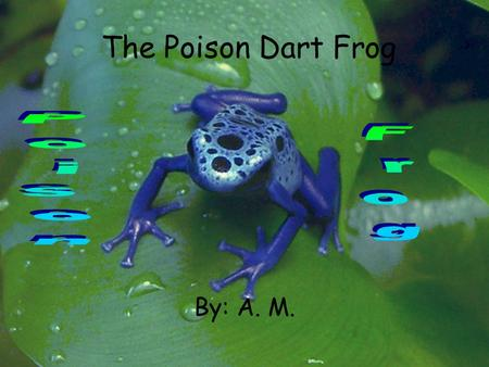The Poison Dart Frog Poison Frog By: A. M..