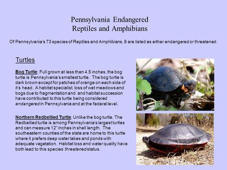 Pennsylvania Endangered Reptiles and Amphibians Of Pennsylvania's 73 species of Reptiles and Amphibians, 8 are listed as either endangered or threatened.