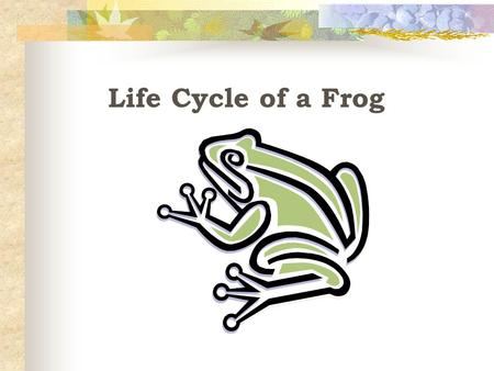Life Cycle of a Frog 1. 2. 3.4. 5. What is the first stage of the Frog life cycle called? A. Adult Frog B. Eggs C. Froglet D. Tadpoles E. Tadpoles with.