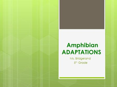 Amphibian ADAPTATIONS