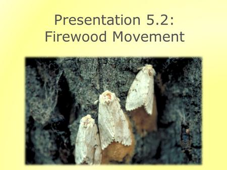 Presentation 5.2: Firewood Movement. Outline Invasive Species and Firewood Movement Preventing Firewood Movement.