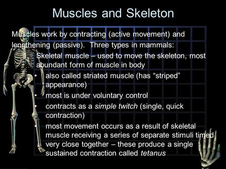 Muscles and Skeleton Muscles work by contracting (active movement) and lengthening (passive). Three types in mammals: 1.Skeletal muscle – used to move.