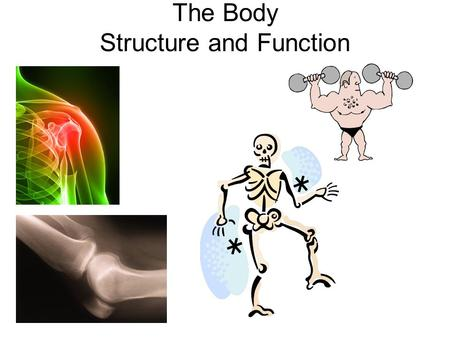 The Body Structure and Function. LEARNING OBJECTIVES By the end of this lesson you will; Know the different types of joints Have a clearer understanding.