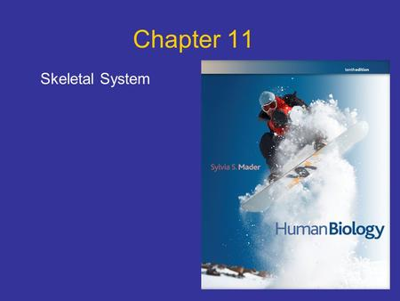 Chapter 11 Skeletal System. Points to Ponder What are the 5 functions of the skeletal system? What are the parts of a long bone? How do bones grow, remodel.