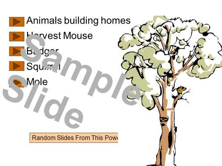 Random Slides From This PowerPoint Show Animals building homes Harvest Mouse Badger Squirrel Mole Sample Slide.
