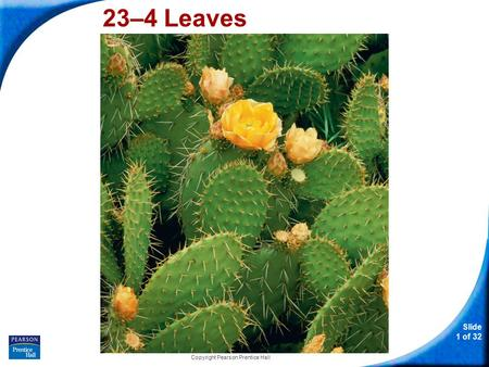 Slide 1 of 32 Copyright Pearson Prentice Hall 23–4 Leaves.