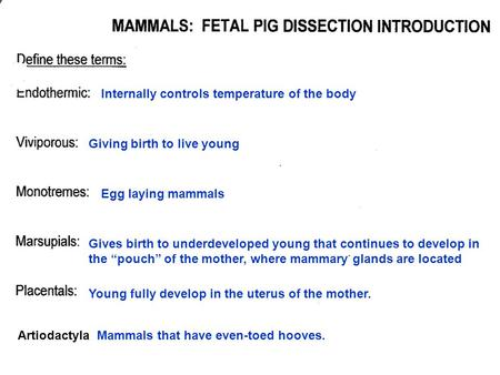 Internally controls temperature of the body Giving birth to live young Egg laying mammals Gives birth to underdeveloped young that continues to develop.