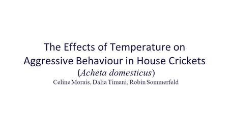 The Effects of Temperature on Aggressive Behaviour in House Crickets ( Acheta domesticus) Celine Morais, Dalia Timani, Robin Sommerfeld.