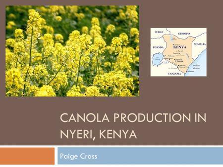 CANOLA PRODUCTION IN NYERI, KENYA Paige Cross. Canola -- Brassica napus  Edible rapeseed developed in Canada in 1970s  Two main varieties: Argentine.