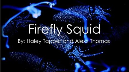 Firefly Squid By: Haley Tapper and Alexx Thomas. The Firefly Squid My Scientific Name: Watasenia Scintillans My Other Names: Sparkling Enope Squid I am.