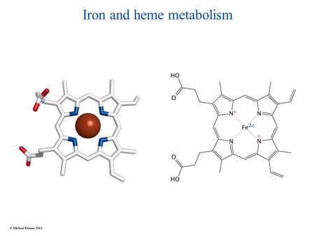 Iron and heme metabolism © Michael Palmer 2014. Functions of heme Redox chemistry ● electron transport: cytochromes in the respiratory chain ● enzyme.