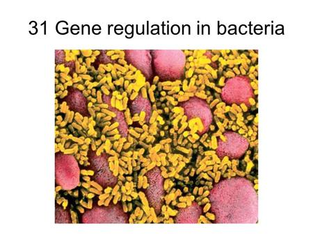 "31 Gene regulation in bacteria. Lecture Outline 11/18/05 Finish up from last time: Transposable elements (""jumping genes"") Gene Regulation in Bacteria."