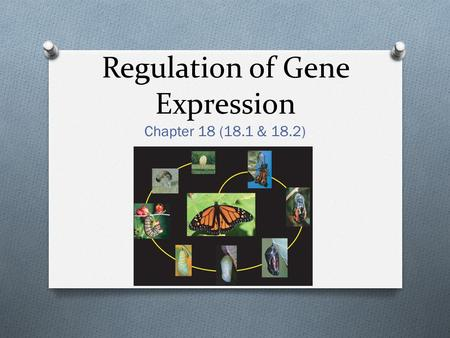 Regulation of Gene Expression