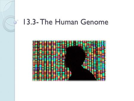 13.3- The Human Genome. What is a genome? Genome: the total number of genes in an individual. Human Genome- approx. 20,000 genes on the 46 human chromosomes.