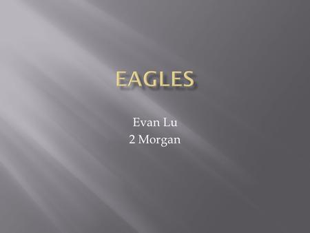 Evan Lu 2 Morgan.  Eagles weigh 4 to 15 pounds  Eagles have curved beaks  Eagles have strong sharp talons  Eagles have brown, black and white feathers.