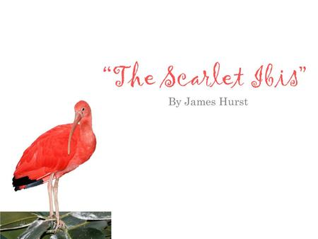 """The Scarlet Ibis"" By James Hurst."