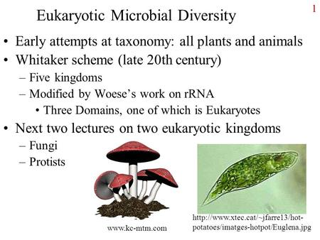 1 Eukaryotic Microbial Diversity Early attempts at taxonomy: all plants and animals Whitaker scheme (late 20th century) –Five kingdoms –Modified by Woese's.