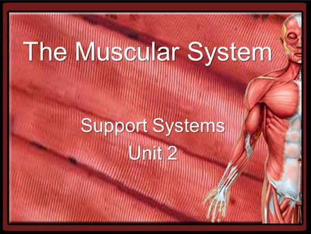 The Muscular System Support Systems Unit 2. Functions of the Muscular System Heat Production (thermogenesis) –Heat is a byproduct of muscle contraction.