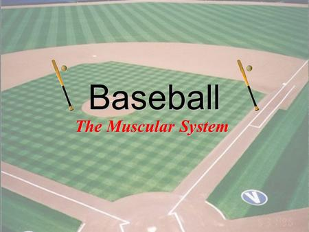 1 Baseball The Muscular System 2 What role does ATP play in muscle contraction? –Answer: it is the source of energy for the sliding filaments Which muscle.