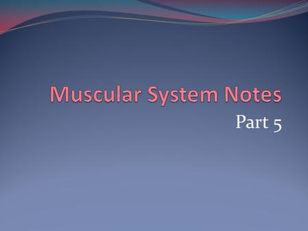 Muscular System Notes Part 5.