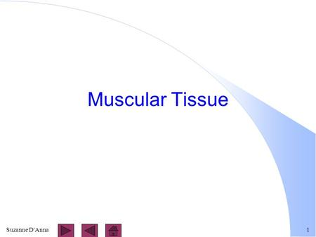 Suzanne D'Anna1 Muscular Tissue. Suzanne D'Anna2 Types of Muscle Tissue l skeletal l cardiac l smooth.