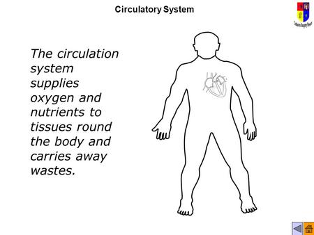 Circulatory System The circulation system supplies oxygen and nutrients to tissues round the body and carries away wastes.