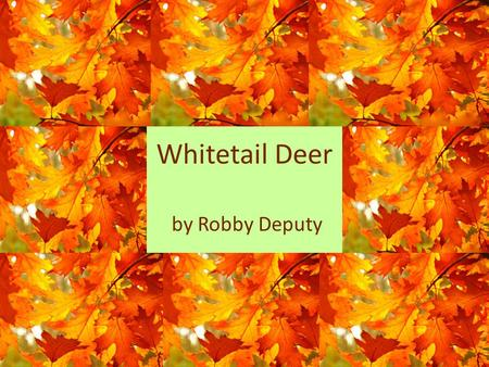 Whitetail Deer by Robby Deputy. INHERITED TRAITS.
