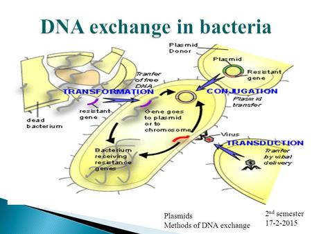 Plasmids Methods of DNA exchange 2 nd semester 17-2-2015.