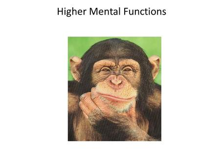 Higher Mental Functions. The brain exhibits electrical activity, which is associated with higher mental functions.