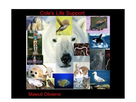 Cole's Life Support Mawuli Olivierre. Touching spirit Bear is a novel about a Young man name Cole Mathews who was brought up under abusive condition.