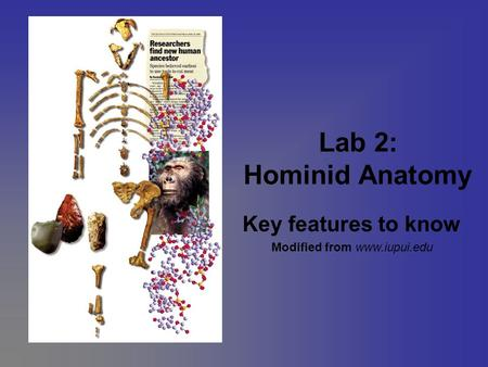 Lab 2: Hominid Anatomy Key features to know Modified from www.iupui.edu.