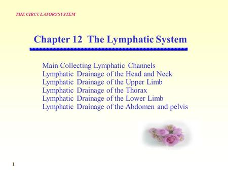 Chapter 12 The Lymphatic System